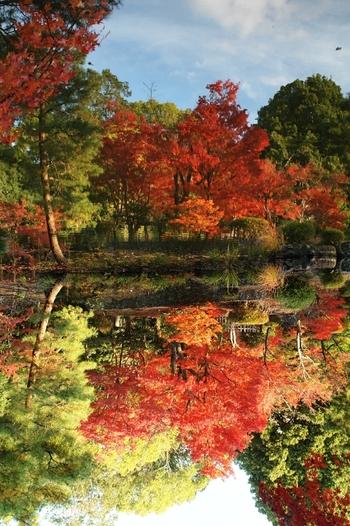 京福電鉄等持院駅から10分ほど歩くと等持院に着きます。庭園にある「心字池」と「芙容池」の周りを歩きながら紅葉を見ることができます。水面に映る紅葉の色が鮮やかで、心が洗われるようです。天気の良い日に行くのがおすすめです。