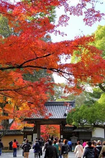 紅葉シーズンの京都は、とても混雑します。せっかく紅葉を見に行ったのに、結局見たのは人ばっかり…ということも。京都でも、比較的混雑が少ない寺院なら、ゆっくりと紅葉を見ることができますよ。有名な寺院でなくても、京都らしい紅葉を楽しめるんです。