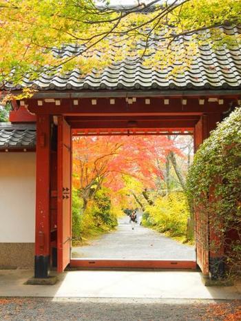 門をフレームとして紅葉を観賞するのもおすすめです!常照寺の近くには、二つの窓から紅葉を眺められることで有名な「源光庵」や、紅葉の名所として人気の「光悦寺」もありますので、少し混雑しますがそちらにも足を運んでみてはいかがでしょうか。