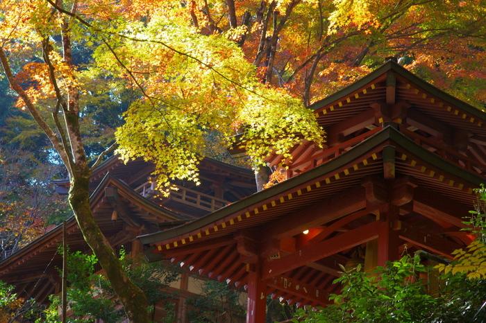 太陽に照らされた紅葉。賑やかな嵐山から少し離れて、しんとした空気を味わってみましょう。