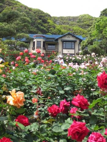 こちらは薔薇咲く季節の画像。庭一面とてもいい香りです。
