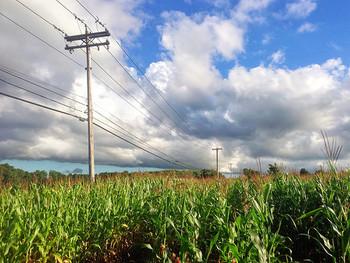 トウモロコシはとにかく日当たりが重要です!生育適温も高いので、太陽がさんさんと当たる場所で育ててあげましょう。そして乾燥にも注意です!特に実成りに影響する開花前後と成熟前後には気をつけましょう。