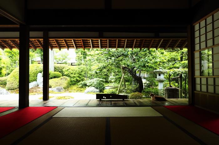 鶴岡八幡宮を始め、建長寺や円覚寺、報国寺、明月院など、鎌倉はたくさんの神社仏閣があります。鎌倉といえばやはり鎌倉幕府のころの歴史が濃く色づいていますが、歴史的にも重要な文化財が日常にあるのも豊かな暮らしのひとつですね。  写真は浄妙寺喜泉庵。猫がたくさんいることでも有名です。