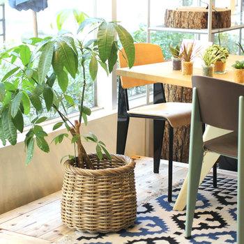 プランターカバーにすれば味気ない植木鉢もオシャレに早変わり! 気分や季節によって変えてみるのも楽しいかも♪