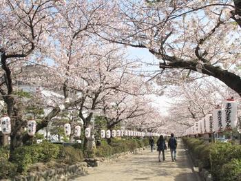 春には満開の桜並木が鳥居まで続く鶴岡八幡宮の段葛を。 夏には江ノ島で湿り気を帯びた風に当たりながら夕闇を待ち、秋の夜長は親しい人とお酒を飲みながら…  そんな日常が鎌倉にはあります。 せっかく四季があるのだから、味わいたいですよね。鎌倉は季節を色濃く感じられる街でもあります。