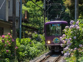 所要時間は1時間から1時間半ほどかかりますが、都内の主要な駅にはほぼ1本でアクセスできます。鎌倉から通勤している人も多いようですよ。  とはいえ、鎌倉は観光地なので、季節によってはたくさんの人でごった返すことも。江ノ電も満員になり、明月院などの観光名所は数時間待ちになることもあります。休日の混雑は覚悟しておきましょう。