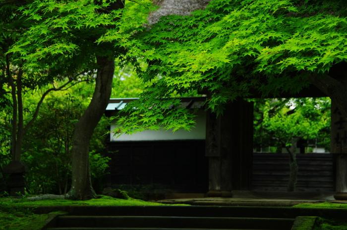 確かに都心から電車に乗っていると、大船を過ぎたあたりから気温がぐっと下がるのを感じます。北鎌倉の鬱蒼とした緑を見ると、「ああ、帰ってきたなあ」なんて心がほぐれていくのです。