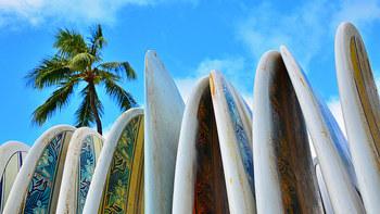 LAビーチでは真っ青な海の上で波を楽しむサーフィンやサーフボード、白い砂浜で汗を流すビーチバレーなどアクティビティも盛んな地域。ビーチ沿いをサイクリングやジョギングをするのも良いですよね。  レンタル・ショップも至るところにあるので、この際チャレンジしてみるのはいかがですか?