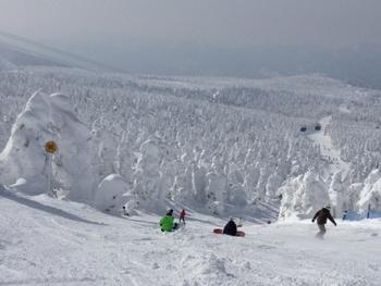 スキー場もある蔵王。このように樹氷の間をスノーボードやスキーで駆け抜けていくことができるんです◎