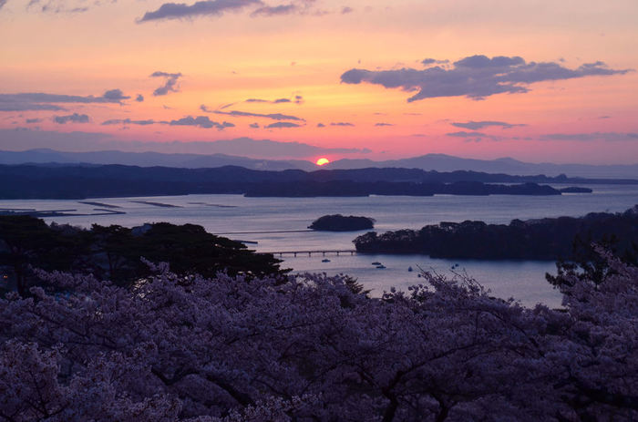 万葉の昔から歌枕として使われ、日本人には馴染みの深い松島。 宮島・天橋立と並び、日本三景とも呼ばれたのは、なんと1714年からなんだそう!