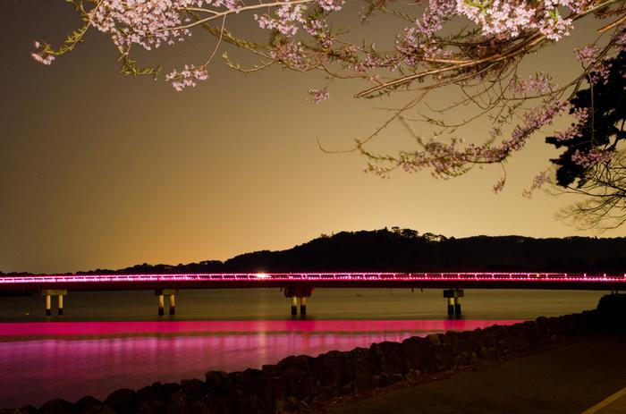 松島の代表格の1つである「福浦橋」は夜のライトアップもキレイです。