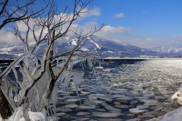 氷の芸術とも呼ばれる、【しぶき氷】。 猪苗代湖は標高514メートルにあるため、ー10度まで下がることもあるそう。そのため、波しぶきがどんどん氷となり、美しい氷の世界が広がっていきます。