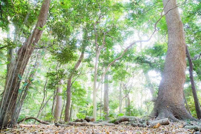 実はこの鎮守の杜は明治神宮の創建に合わせて作られた人口の森。日本各地から集まった樹木10万本を5年がかりで植樹したそう。神聖で美しい森にはそんなエピソードがあったんですね。