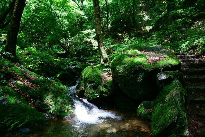 御岳山には清流が流れるロックガーデンと名付けられた1.5kmに渡る散策路があります。涼しげな清流の奏でる音に、心が癒されることでしょう。森の鳥や虫たちの声も一緒に、楽しんでくださいね。