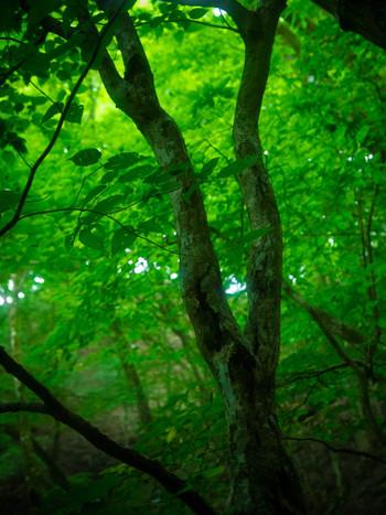 神秘的な新緑の森は、思わず深呼吸したくなる場所です。