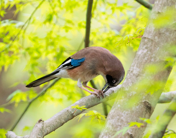 野鳥もたくさんいるので、小さな鳥図鑑を持って行けば、バードウォッチングも楽しめます。