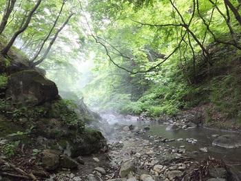 天候や訪れる時間によって湯煙の見え方が変わり、いつ行っても新鮮に感じられる「地獄谷」。光を受けて輝く湯けむりはとても神秘的です。