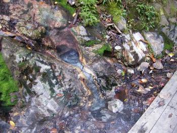 遊歩道の脇には吹き上がらずともボコボコとお湯が沸く湯溜まりがいくつもあり、まさに「地獄谷」という名にふさわしい場所なのです。