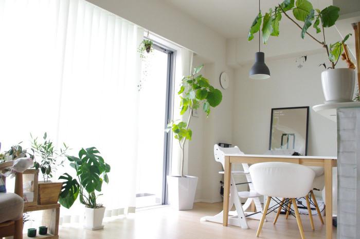 いろいろな種類のグリーンを取り混ぜてみるのも素敵。お部屋のベースが白とナチュラルなベージュ系なので、どんなグリーンでも受け止めてくれるおおらかさがありますね。