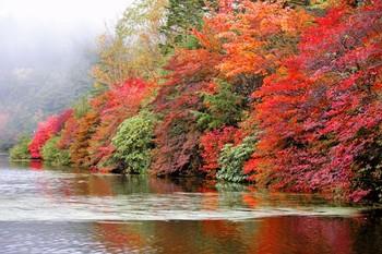 原生林を抜けると、美しい白駒池が。 ドウダンツツジの紅葉の名所としても有名です。