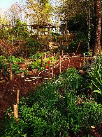 """現在、フランス生まれの""""ポタジェ""""が日本で密かなブームになっているってご存知でしたか?ポタジェとは、果樹や野菜、ハーブを混ぜて育てるおしゃれな家庭菜園のことを指し、庭がなくても、ベランダの小スペースを活用して手軽にはじめられるのが魅力的。今回は、そんなポタジェを大解剖!いろいろなポタジェガーデンのアイデアやコンパニオンプランツのご紹介はもちろん、目と舌の両方で楽しめるポタジェの作り方もたっぷりとお届けします。"""