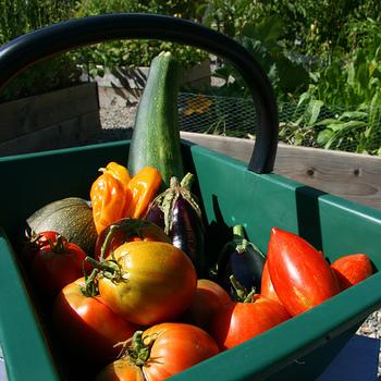 食の安全への関心の高まりから、家庭菜園をやってみたいと考える人が増えてきました。