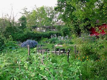 「ポタジェ」とは、フランス語で「家庭菜園」のことですが、日本では花やハーブや野菜を一緒に植えて、食べるだけでなく見た目も楽しむ菜園の事を表します。イギリスでは家庭菜園の事を「キッチンガーデン」と言う事から、この名で呼ぶことも多くなってきています。