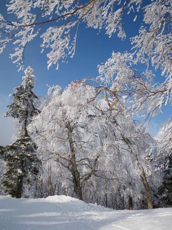 効能抜群の白濁湯が特徴の「万座温泉」。  スキーリゾート地として有名ですが、江戸末期から湯治客で賑わってきた由緒ある温泉地です。