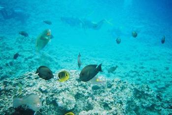 掘削などが行われていないので、海水浴には不便なところも。 でもその中で海の生き物たちの暮らしが守られています。