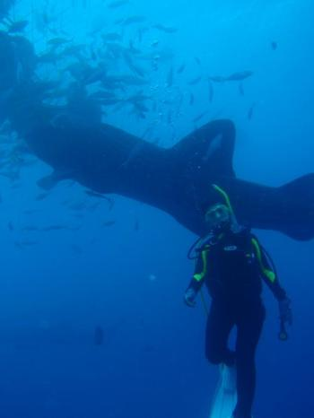 ニライビーチはダイビングが好きな方には絶対おすすめ! とってもきれいな海の世界を満喫できますよ。