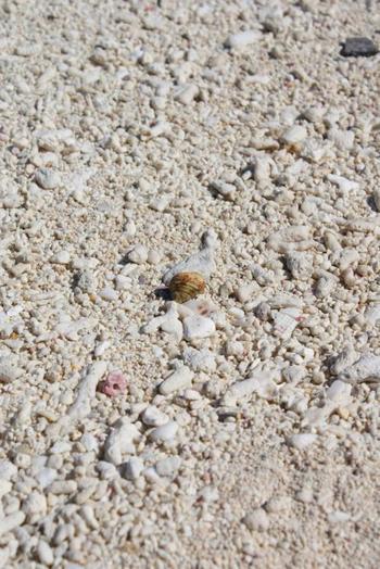 サンゴのかけらでできた真っ白なビーチ。6月下旬から9月にかけては産卵のために多くのウミガメがやってきます。 1月から3月には繁殖のためにザトウクジラもきますよ。