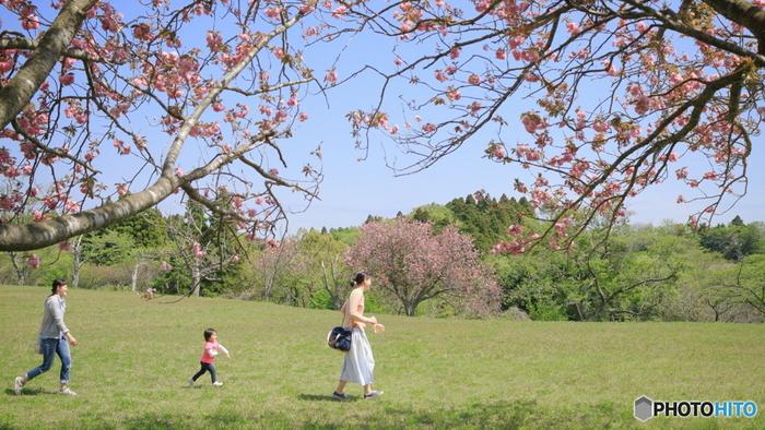 ピクニックに決まりごとはありません。楽しく穏やかに自然を楽しみましょう。おすすめのピクニックの楽しみ方をご紹介します。