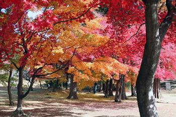 「上田城址公園」は、桜の季節だけでなく、深緑の季節も、紅葉の頃も楽しめる場所です。ゆったりと散歩するのにオススメ。