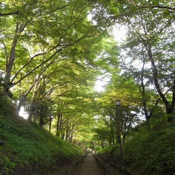 「上田城址公園」の中で、特に素晴らしいのは樹齢100年といわれる「ケヤキ並木」。夏は木陰を作り、秋は素晴らしい紅葉が眺められます。