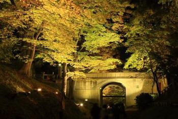 ライトアップされた「上田城址公園」ケヤキ並木の紅葉と二の丸橋。