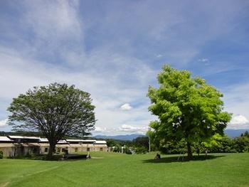 ここが日本だと信じられないほどの広大な敷地。ゆるやかな芝生は大人でもゴロゴロ転がりたくなります。