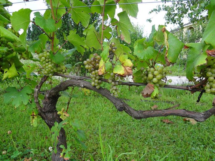 秋はブドウの収穫の時期で、1年で最も忙しい時期。一年を通じて、ブドウと自然の変化が楽しめます。
