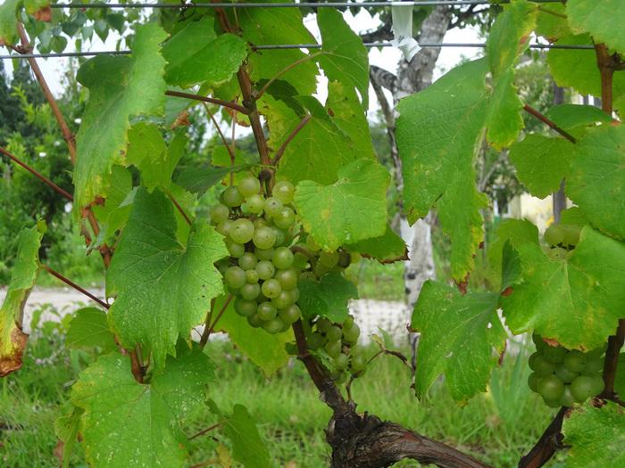 ぶどうの収穫が体験できる「サンクゼールワイナリー収穫祭」など、主に春から秋を通じてイベントが開催されているのでチェックしましょう。