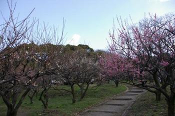 額田展望台への最寄駅・枚岡(ひらおか)駅から、額田山のハイキングコースへの入り口にある金剛生駒国定公園<枚岡公園>には、早春には梅林が、
