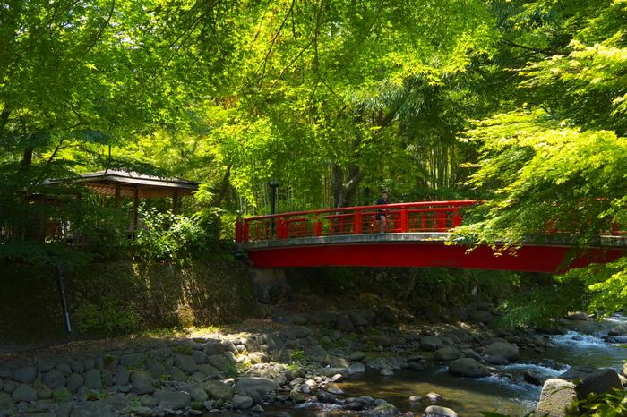 """弘法大師空海によって開山した「修善寺」を中心に広がる修善寺温泉。  修善寺温泉街には、朱塗りの橋が掛かる川が流れ、川沿いの小径や路地には、歴史ある寺社仏閣、趣きある温泉旅館や店が点在しています。  街中を散策すれば、""""伊豆の小京都""""と呼ばれるに相応しい風情に浸ることが出来ます。"""