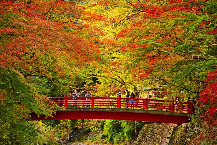 【竹林や朱塗りの橋(桂橋)が印象的な修善寺温泉は、紅葉の名所。(例年11月下旬から12月上旬の頃)】
