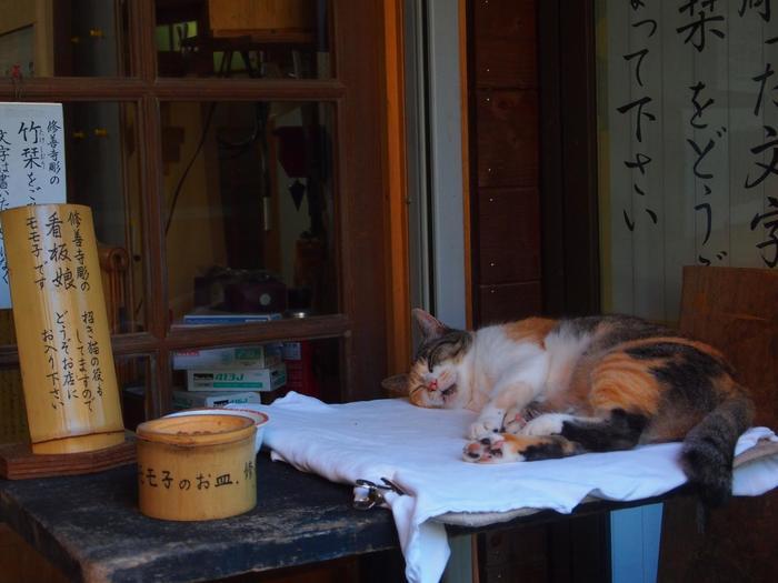 猫のモモ子は、「指月殿」へと続く道すがらにあるお店の看板娘。