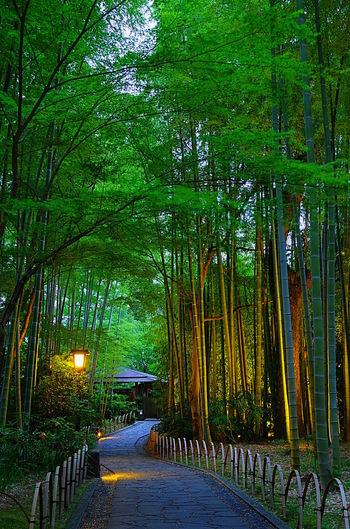一年を通じて清涼な竹林。  竹林の中を通れば、静謐な風情を味わうことができます。