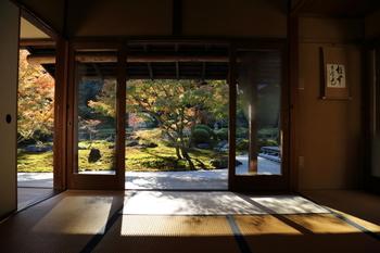 室内の座敷から見る庭園は、一幅の絵画のよう。静寂を感じる凛とした情景ですね。