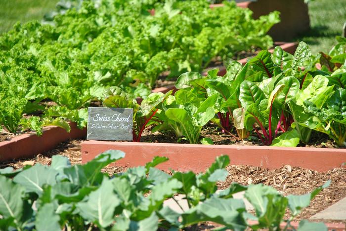 板を使ってきっちりと区画別けしてもスマートでオシャレ。プレートを付けることで、何の植物を植えているのか分かりやすく、英語で書くとさらにオシャレ感UP!