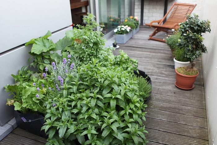 庭がなくても、コンテナやシートを上手く使ったベランダなどで、小さなポタジェガーデンを作る事もできます!