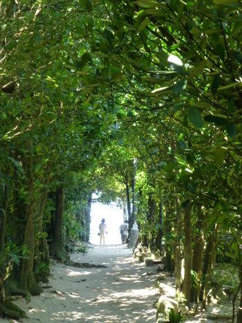 写真は、緑のトンネル「備瀬のフクギ並木」。備瀬は、沖縄の原風景が残る貴重なエリアで、ゆったりとした時間が流れる癒しのスポットです。心地いい春風を感じながらの散策はいかが?美ら海水族館の近くにあります。