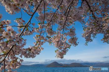 少し遅めの桜は例年5月上旬~中旬に咲きます。対岸に見える羊蹄山は蝦夷富士とも呼ばれ、時期によってはまだ雪が残っていることも。雪と桜との美しいコントラストも見ものなんです。