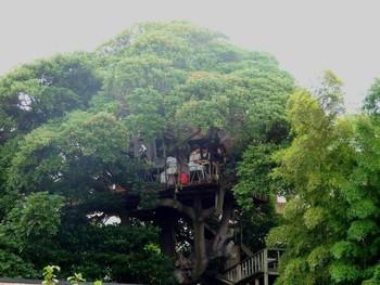 木の家|無印良品の家 - muji.net
