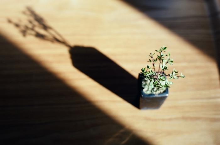 盆栽は日光を好みますので、室内に置いて観賞したい場合でも、たまには外気に当ててあげましょう。 室内においても、日当たりが良く風通しの良い場所、東南の窓際などがベストです。